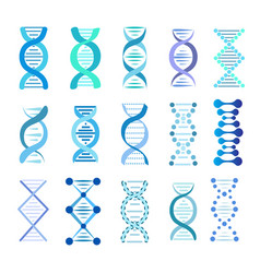 dna strands set stock vector image