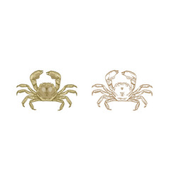 mitten crab set colorful and vector image