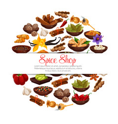 Spices and herbs poster vector