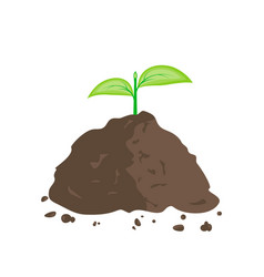 green sprout in pile of ground vector image