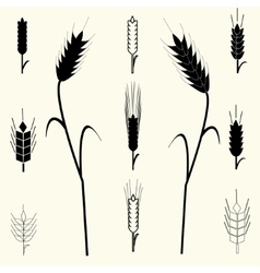 Wheat Ears set vector image vector image