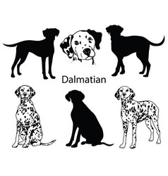 dalmatian set collection pedigree dogs black vector image