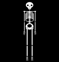 human skeleton halloween icon vector image