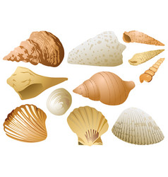 seashell set on white background vector image