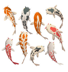 Set calmly floating fish koi fish vector
