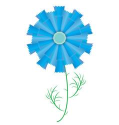 single cornflower vector image