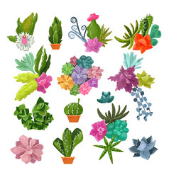 Cactus cartoon botanical potted cacti with vector