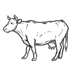 cow icon hand drawn style vector image
