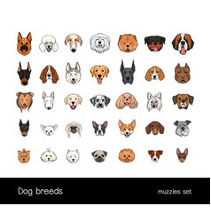 Dog breeds muzzle set collection with hand drawn vector