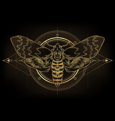 Golden moth over sacred geometry sign isolated vector