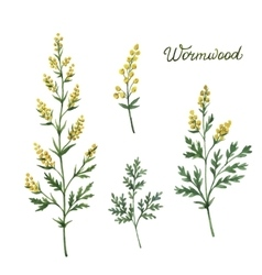 Hand drawn watercolor botanical vector