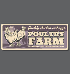poultry farm chicken and eggs products vector image