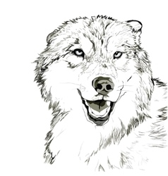 Wolf muzzle sketch vector image