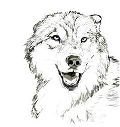 Wolf muzzle sketch vector