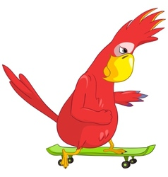 Funny Parrot Skateboarding vector image