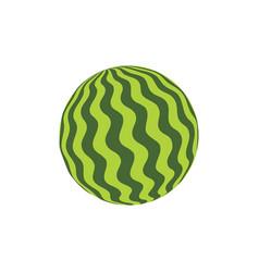 watermelon rubber ball vector image