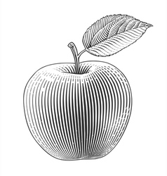 Apple in engraving style vector