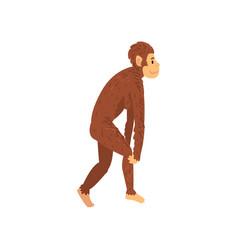 Female australopithecus biology human evolution vector