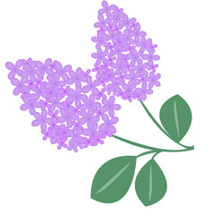 Lilac branch flower icon vector
