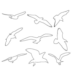 paths seagull set on white background vector image