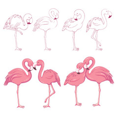 Sketched flamingos vector