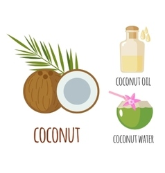 Superfood coconut set in flat style vector