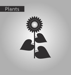 Black and white style icon of sunflower vector