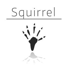 Squirrel animal track vector image