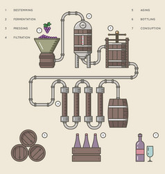 Wine making process or winemaking infographic vector