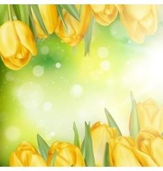 Beautiful yellow tulips eps 10 vector