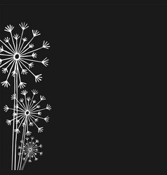 hand drawn white silhouette three dandelion on a vector image