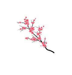 pink cherry branch vector image