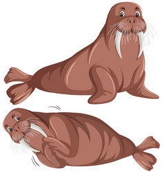 set of walrus character vector image