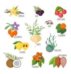 Superfoods in flat style vector