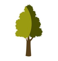tree plant foliage natural bark design vector image