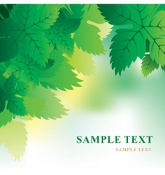 soft background with grape leaves vector image