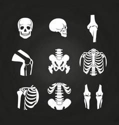 white human skull and bones vector image