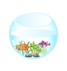aquarium with fishes vector image