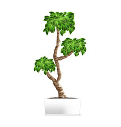 bonsai tree isolated on white element of home vector image