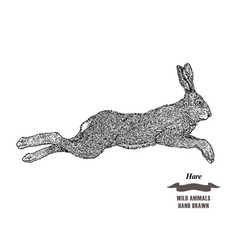 forest animal jumping hare or rabbit hand drawn vector image