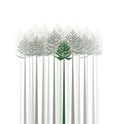 forest fir trees vector image