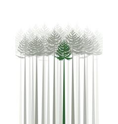 Forest fir trees vector