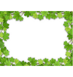Frame from the green maple leaves vector