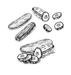 Hand drawn set of cucumber sketch vector