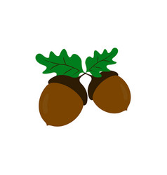 acorns of strong oak icons of color vector image
