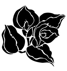 Decorative calla vector