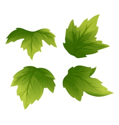 Set of Green Leaves vector image
