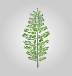 with fern frond silhouettes isolated floral vector image