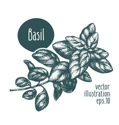 basil branch for design menu vector image