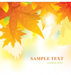 soft background with autumn leaves vector image vector image